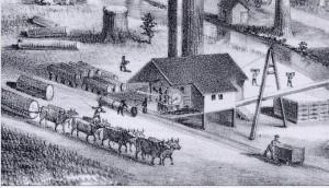 Copy of REDWOODS-SAN-MATEO