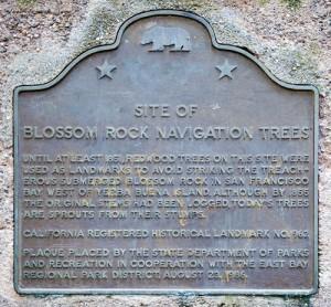 blossom_rock_navigation_trees_plaque_thumb