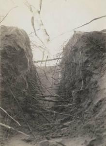 40 foot deep redwood roots