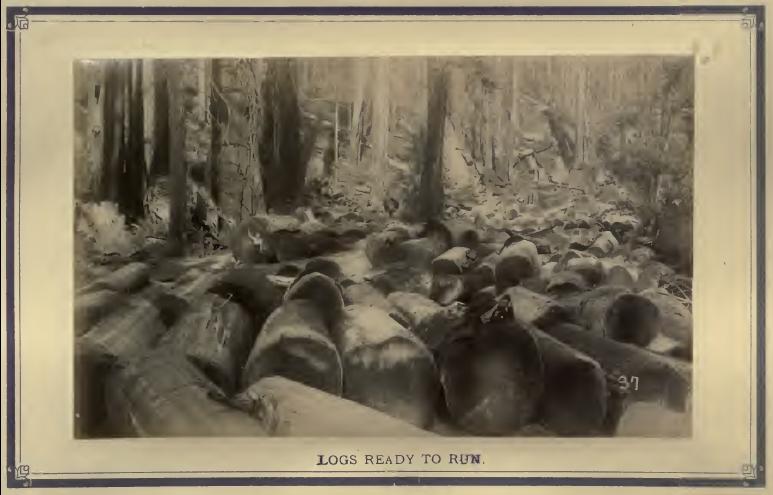 redwood 18