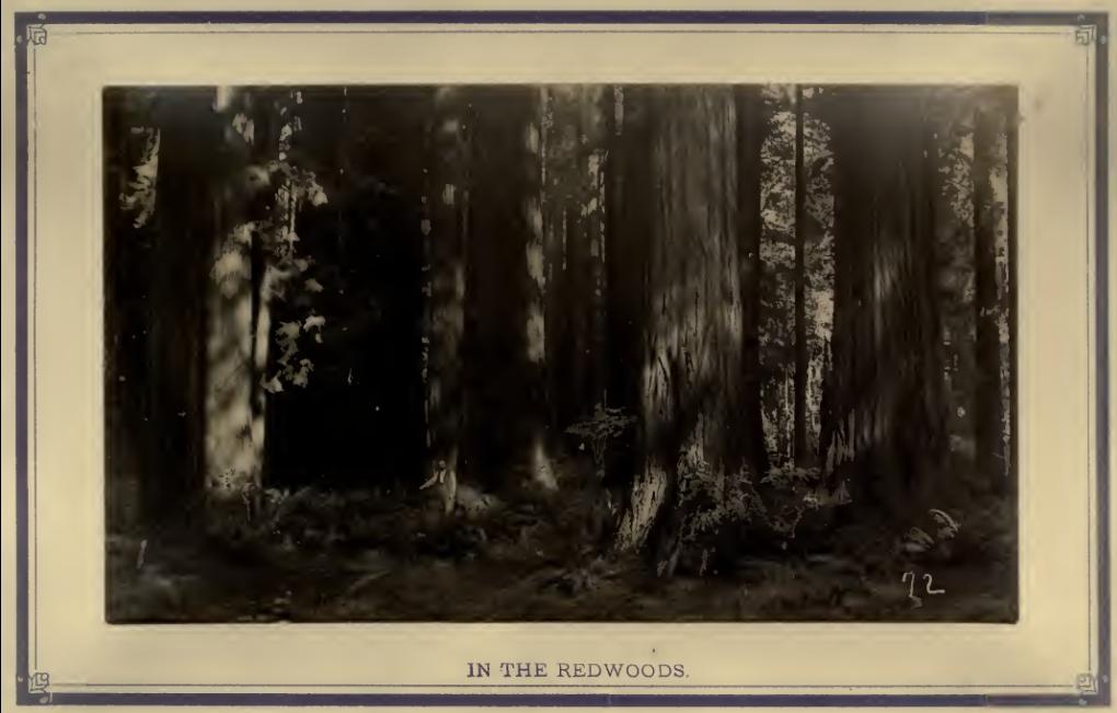 redwood lumbering 1