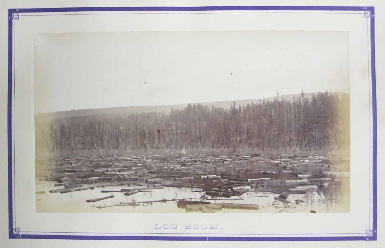 redwoods 14