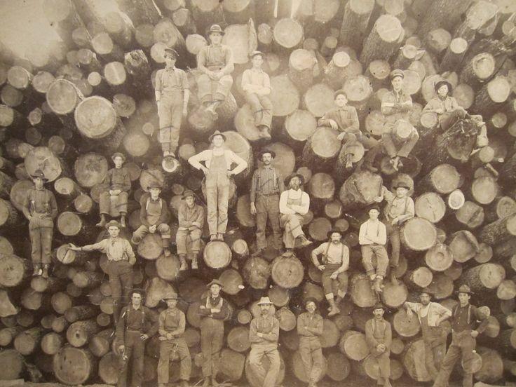 redwoods 16